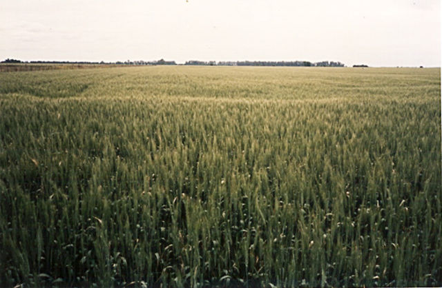Causas del hambre en África; expolio y privatización de la tierra